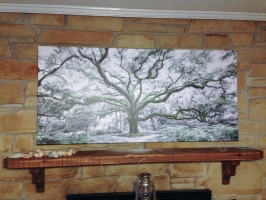 <h5>Tree of Life 28x60</h5>