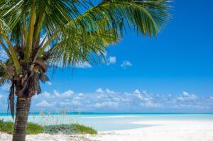 Bahama Blue Big
