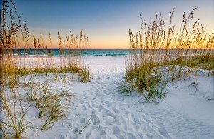 Beautiful Florida Standard Big