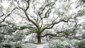 Tree Of Life Big