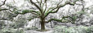 Tree Of Life Panoramic Big