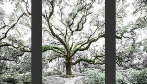 Tree Of Life Triptych