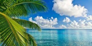 Tropical Oasis Big