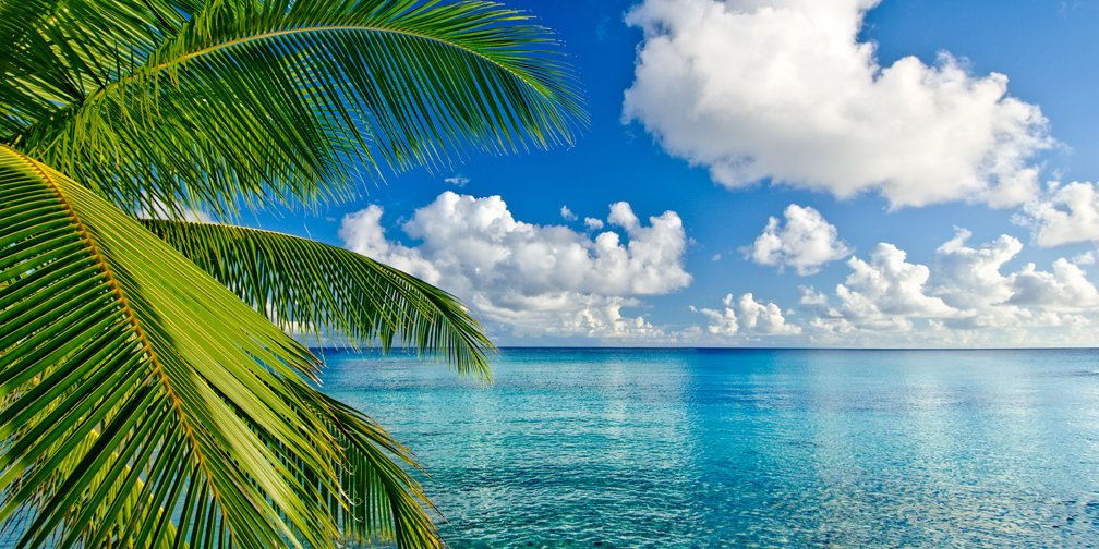 Tropical Oasis – Jasinski Brothers Photography
